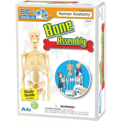 Человек и природа Artec Hands-on Lab Bone Assembly